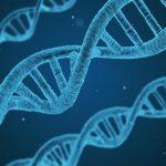 遺伝子と矛盾はけっこう似ている