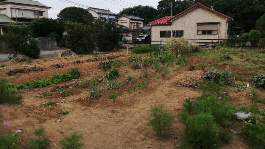 雑草と戦ってみた。たまおの畑作り日記その1(チガヤ除去編)